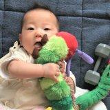 生後7ヶ月 知育玩具 おもちゃ
