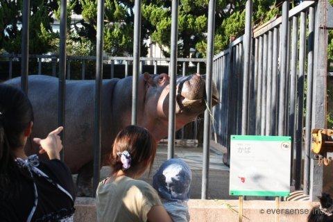 布おむつ 体験談 動物園 オリジナル画像