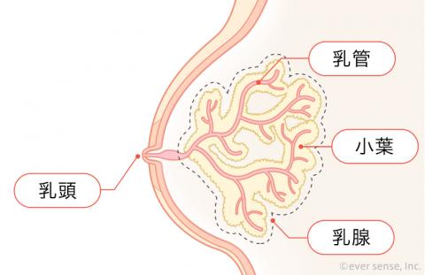 乳腺炎 乳房