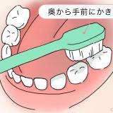 歯磨き 奥歯