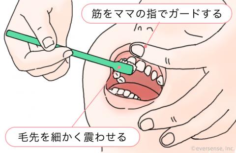 歯磨き 前歯 表