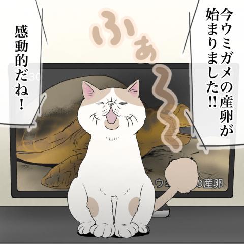 ムチコ ほっこりしない猫と育児 4話