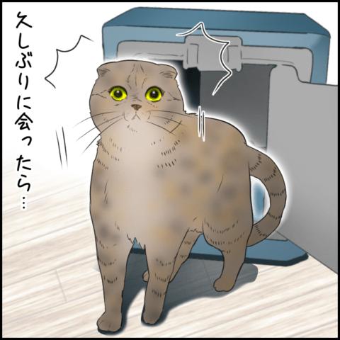 ムチコさん ほっこりしない猫と育児 25